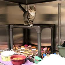 Cats In Dog Beds Durable Dog Beds Cat Towers Bunk Beds U0026 Pads For Shelters And