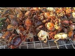 cuisiner le crabe sensationnel fille barbecue crabe dans mon comment