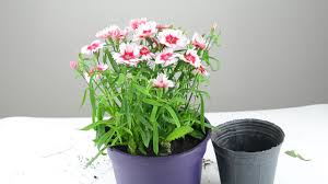 Plants That Need Low Light by How To Plant Flowers 13 Steps With Pictures Wikihow