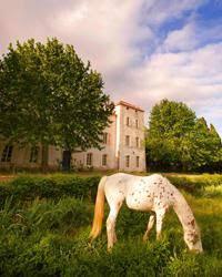 Château De Caraguilhes Domaine De Winewriting Com Mediterranean Wine Languedoc Château De