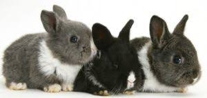 Best Rabbit Hutches Best Rabbit Hutch Review 2017 Bunny Rabbit Lover