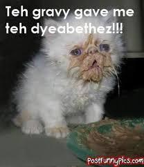 Diabetes Cat Meme - image 21878 diabeetus know your meme