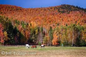 fall foliage england england fall foliage