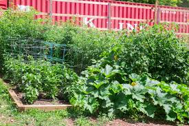 roll out vegetable garden garden archives brooklyn farm