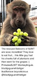 Baboon Meme - 25 best memes about baboons baboons memes