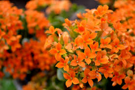 079 flowers orange flowers orange pinterest plants