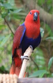 top 10 best kind of pet parrots