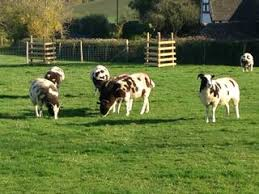 Pets Barn Hartpury Leadon View Barn Self Catering Gloucestershire Holiday Cottage Glouc