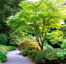 japanese maple 8 pot australia sle site