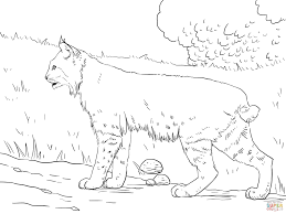bobcat coloring pages bobcat coloring page images pictures becuo