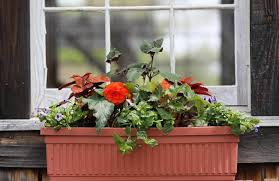 What To Plant In Window Flower Boxes - great plants for container gardens window boxes the boston globe