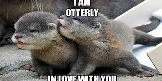 Memes Free Download - cute funny love memes images free download wallpapers hd pinterest