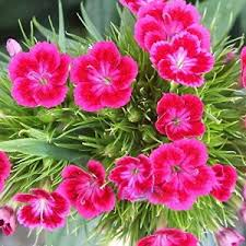 Flower Seeds Online - flower seeds buy flower seeds online at best price in india