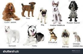types of dogs different breeds dogs together isolated on stock photo 350869766