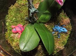 orchid terrarium greenthumb threepines