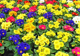 bedding plants grower ornamental plants appoints liquidator