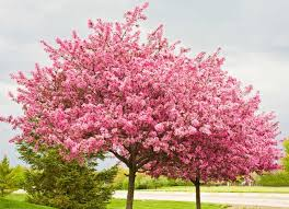 best trees to plant 10 options for the backyard bob vila