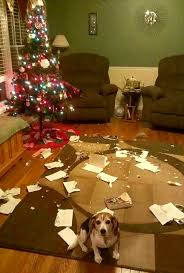 pets hellbent on destroying christmas