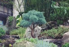 wondrous design ideas trees landscaping photos unique for