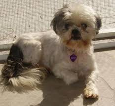 What Causes Dogs To Go Blind Please Help My Dog Is Going Blind Caring For A Senior Dog
