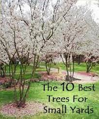 the 10 best trees for small yards gardening ideas tips