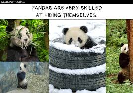 Panda Meme - 15 memes that show pandas are so much more chill than humans ever