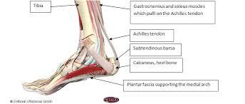 Anatomy Of The Calcaneus Meet Your Calcaneus U2014 The Swan Pilates