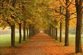 stressed out science says look at some trees psychology today