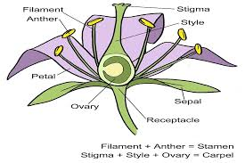 Style Flower Part - flower structure diagram rhs campaign for gardening for