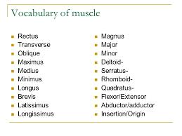 Human Anatomy And Physiology Terminology Anatomy And Physiology Terminology List 10 Best Introduction Human