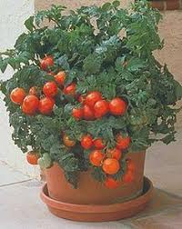 for container gardening chart for container size recommendations