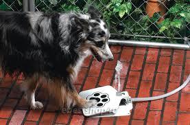 australian shepherd ebay pet dog water fountain outdoor steel with 41