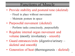 Anatomy And Physiology Place Anatomy And Physiology Muscles And Muscle Tissue Ppt Video