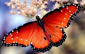 colourful butterflies 27 photos funmag org