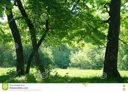 sunny morning in a forest glade stock photo image 71519895
