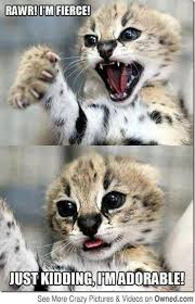 Funny Kitten Meme - funny kitten pictures with quotes wallpapergenk