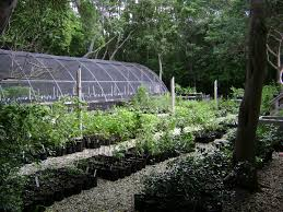 native plant nurseries key largo hammock photo gallery florida state parks