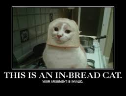 Cat Breading Meme - image 243064 cat breading know your meme