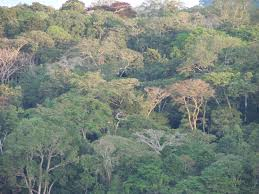 Forest And Waves State Of by Nasa Helps Measure Forests In Gabon Nasa