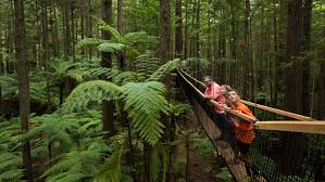 native plants in new zealand a californian redwood experience in new zealand tourism new