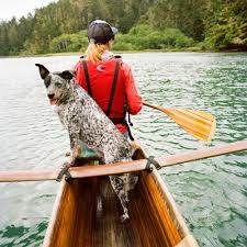 best dog friendly vacations sunset