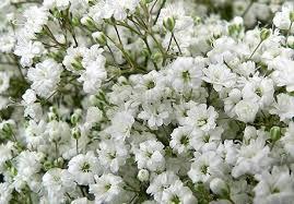 bulk baby s breath bulk flowers durham region bulk floral in courtice fresh cut