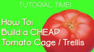 growing tomatoes diy cheap tomato cage trellis youtube