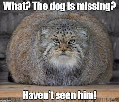 Missing Cat Meme - fat cats exercise imgflip