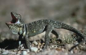 Utah wild animals images Desert animals extreme survivors wild about utah jpg