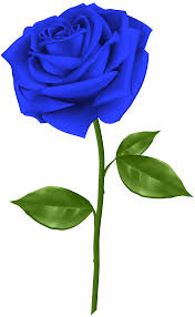 blue roses blue transparent png clip gallery yopriceville high