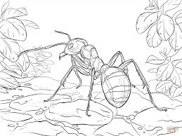 ant raise apple coloring page for kids free coloring book picture