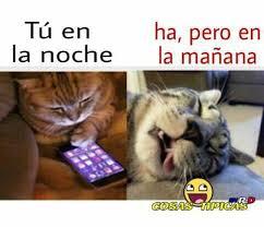 Gato Meme - dopl3r com memes gatos chateando
