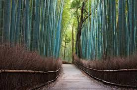 these gorgeous trees are a to behold nature babamail