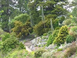 rock garden dunedin botanic garden